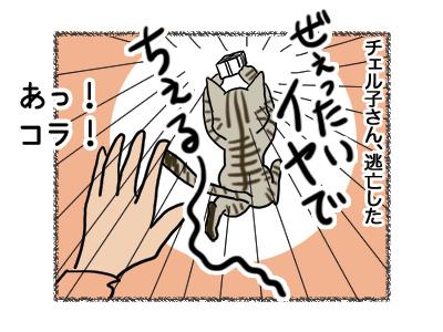 20112018_cat3.jpg