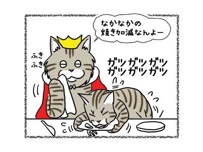 22102018_cat3.jpg