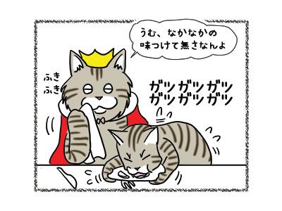 22102018_cat8.jpg