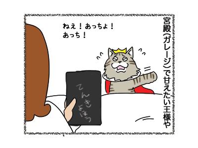 23102018_cat2.jpg