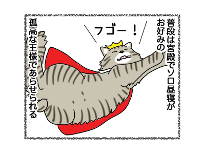 24012019_cat1.jpg
