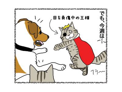 24012019_cat2.jpg