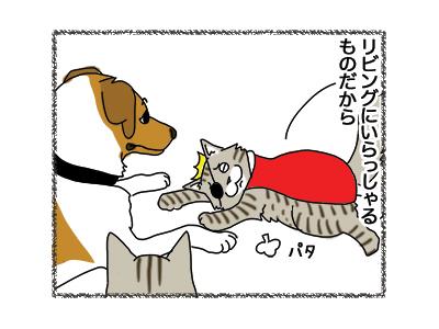 24012019_cat3.jpg