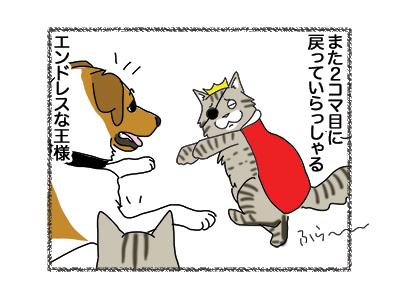 24012019_cat8.jpg