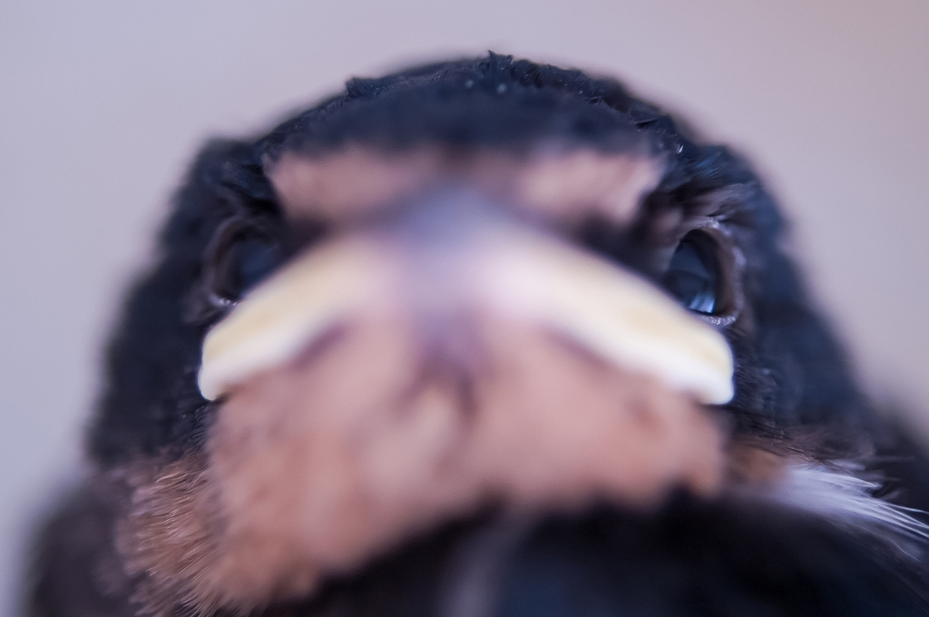 こちらを気にする鳥たち①(7Pic)