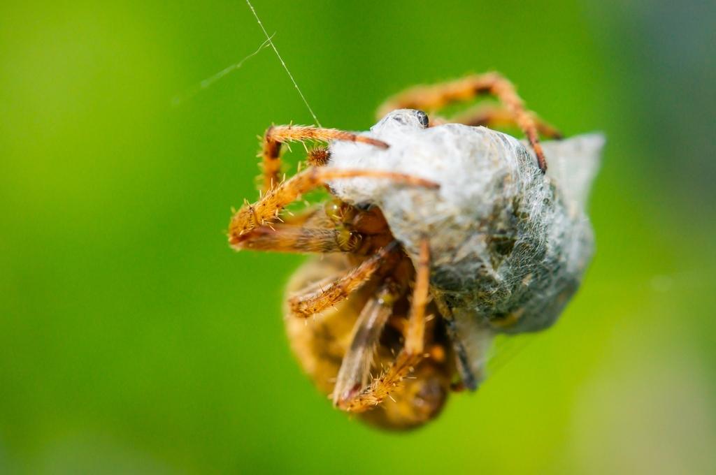 虫を捕った蜘蛛さん (4Pic)