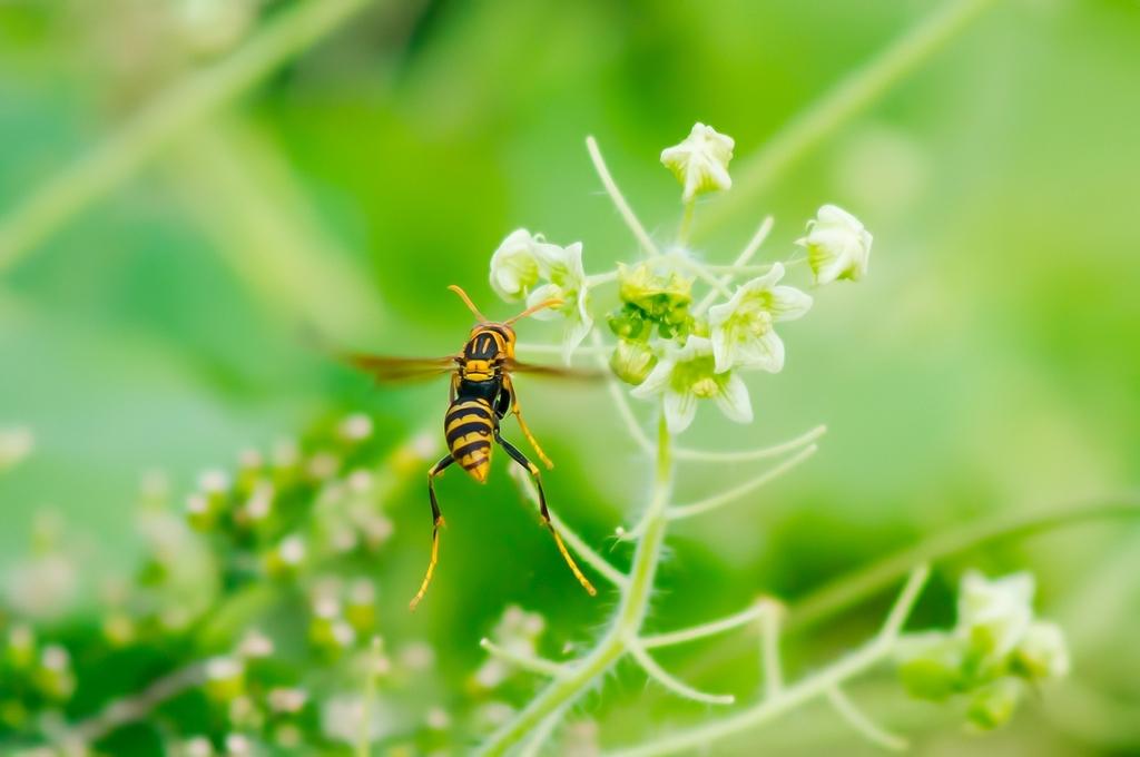 働くアシナガバチさん (6Pic)