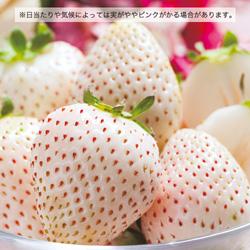 shirayuki-gazou.jpg